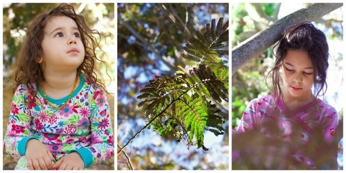 Two little girls in a mimosa tree.